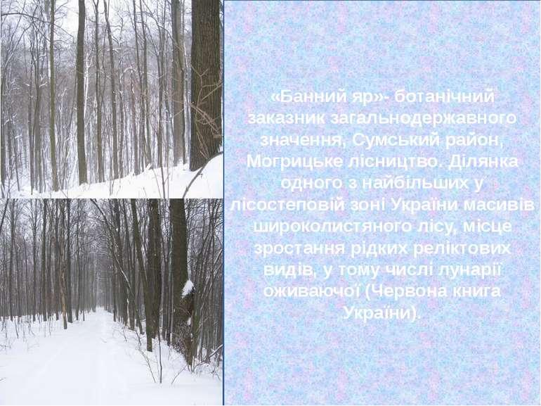 «Банний яр»- ботанічний заказник загальнодержавного значення, Сумський район,...