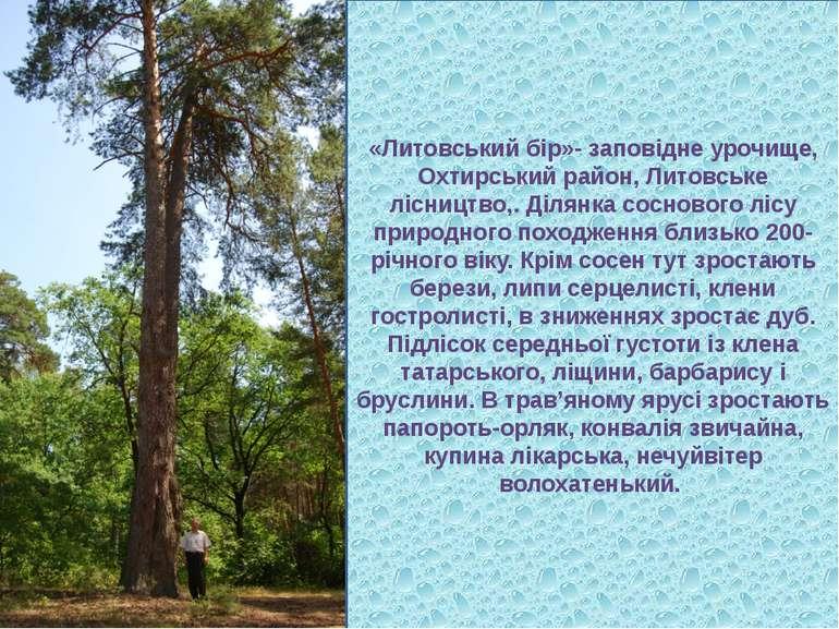 «Литовський бір»- заповідне урочище, Охтирський район, Литовське лісництво,. ...
