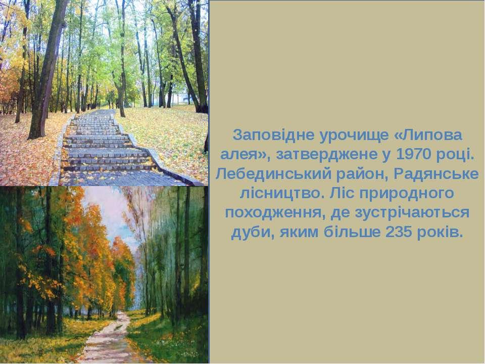 Заповідне урочище «Липова алея», затверджене у 1970 році. Лебединський район,...