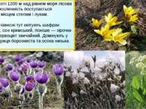 • На висоті 1200м над рівнем моря лісова рослинність поступається місцемсте...