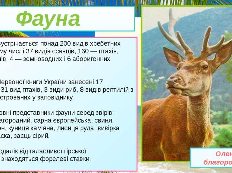 • Тут зустрічається понад 200 видівхребетних тварин, у тому числі 37 видівс...