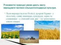 Льон вирощується на Поліссі, цукрові буряки - у лісостепу, озиму пшеницю, кук...