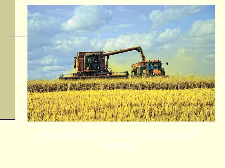 Збір урожаю пшениці в Тернопільській області