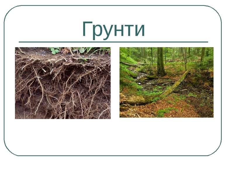 Грунти Сіро лісові