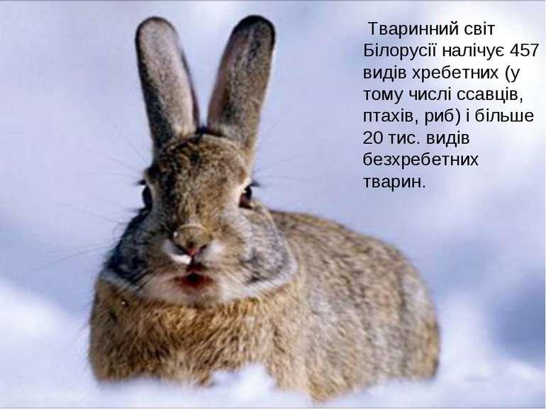 Тваринний світ Білорусії налічує 457 видів хребетних (у тому числі ссавців, п...