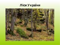 Ліси України