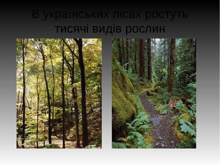 В українських лісах ростуть тисячі видів рослин