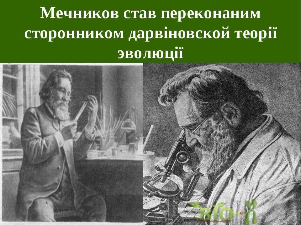 Мечников став переконаним сторонником дарвіновской теорії эволюції
