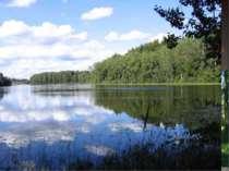 Однією з основних функціональних одиниць екології є екосистема. Цей термін уп...