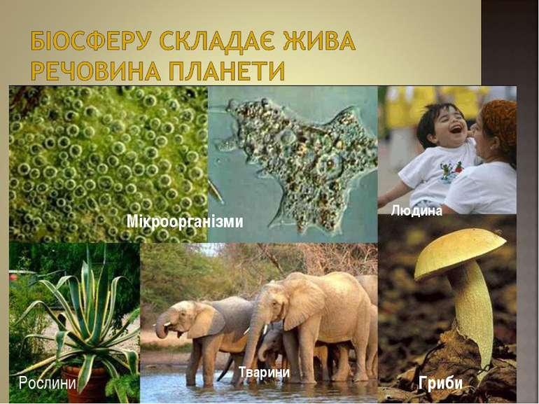 Мікроорганізми Рослини Гриби Людина Тварини