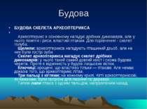 Будова БУДОВА СКЕЛЕТА АРХЕОПТЕРИКСА  Археоптерикс в основному нагадує дрібн...