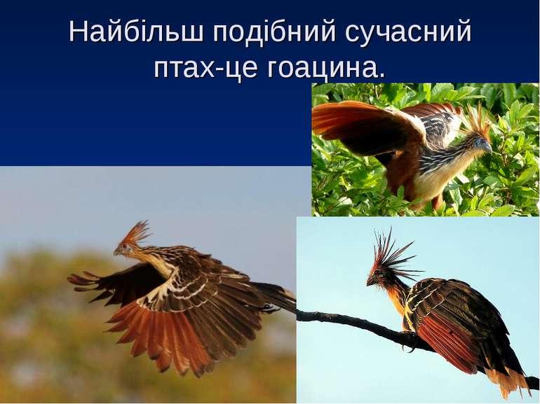 Найбільш подібний сучасний птах-це гоацина.