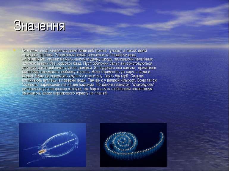 Значення Сальпами іноді живляться деякі види риб (тріска, тунець), а також де...