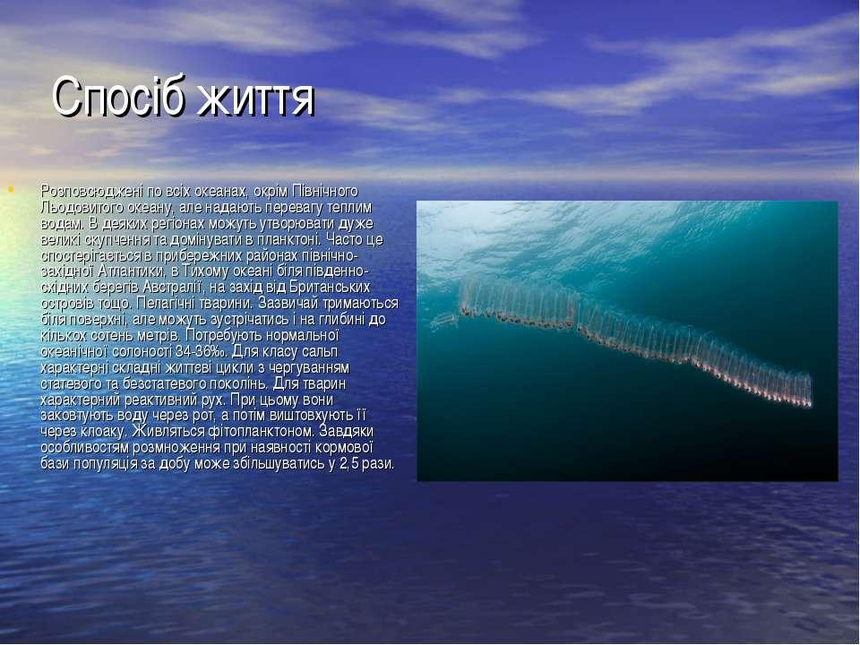 Спосіб життя Розповсюджені по всіх океанах, окрім Північного Льодовитого океа...