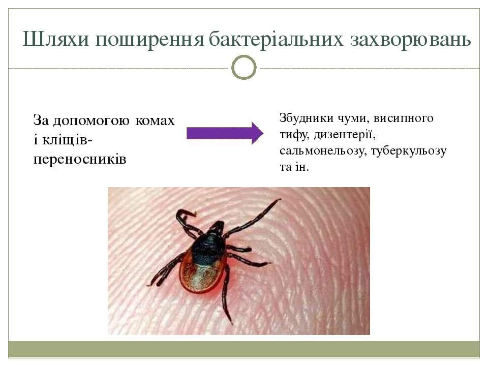 Шляхи поширення бактеріальних захворювань За допомогою комах і кліщів-перенос...
