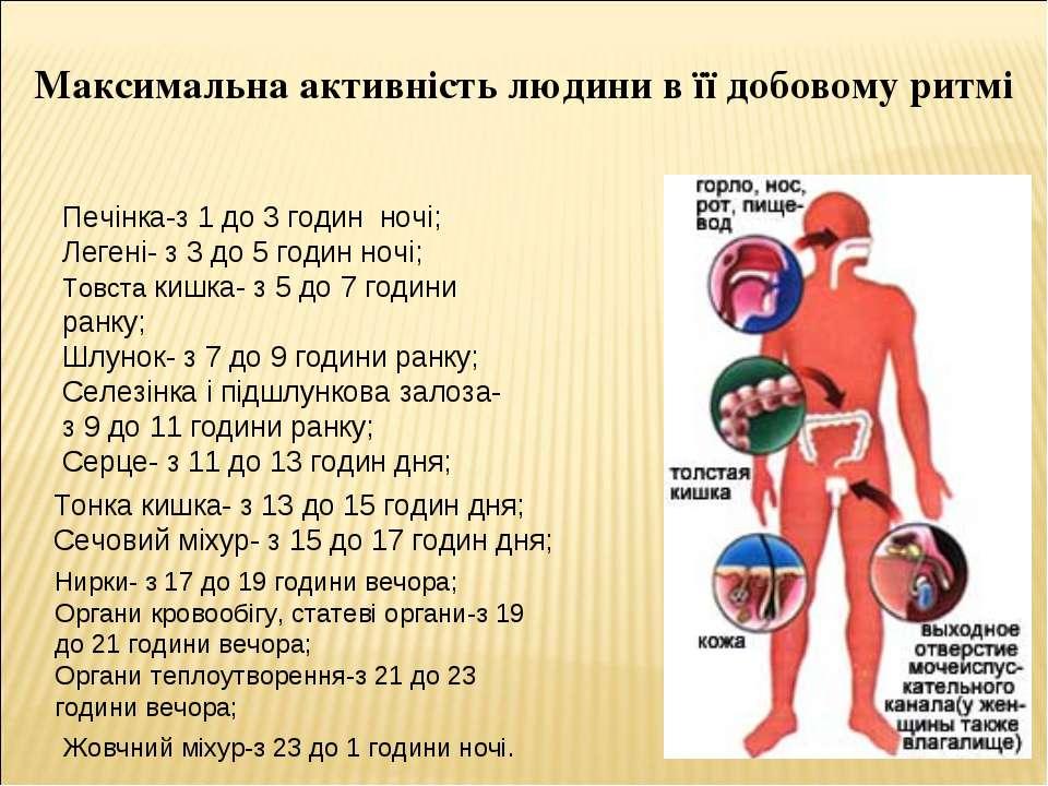 Максимальна активність людини в її добовому ритмі Печінка-з 1 до 3 годин ночі...