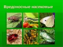 Вредоносные насекомые