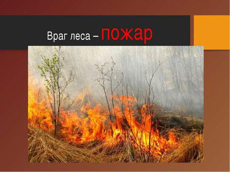 Враг леса – пожар