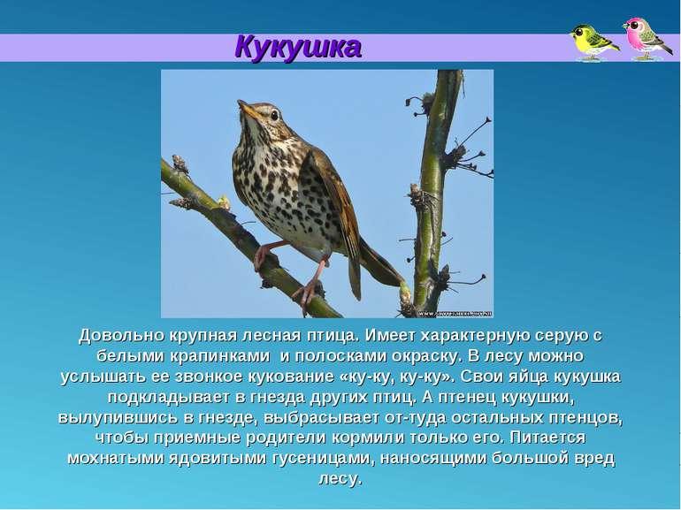 Кукушка Довольно крупная лесная птица. Имеет характерную серую с белыми крапи...