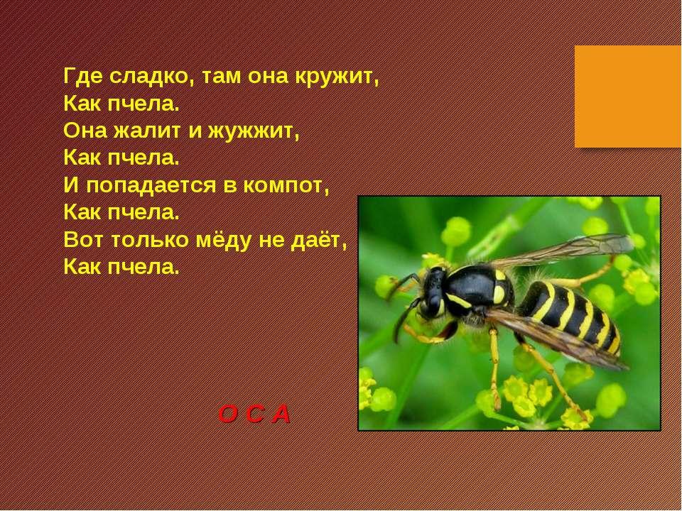Где сладко, там она кружит, Как пчела. Она жалит и жужжит, Как пчела. И попад...