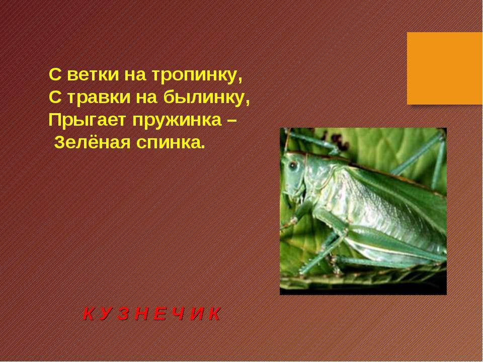 С ветки на тропинку, С травки на былинку, Прыгает пружинка – Зелёная спинка. ...