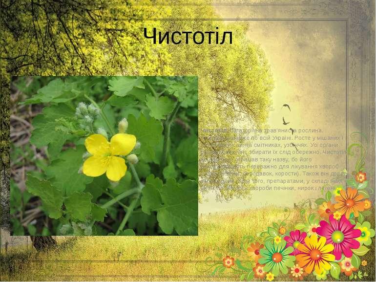 Чистотіл Чистотіл,багаторічна трав'яниста рослина. Поширена майже по всій Ук...