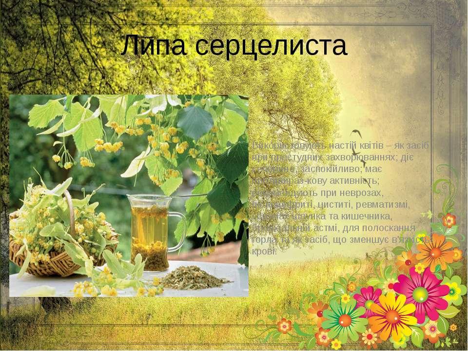 Липа серцелиста Використовують настій квітів – як засіб при простудних захвор...
