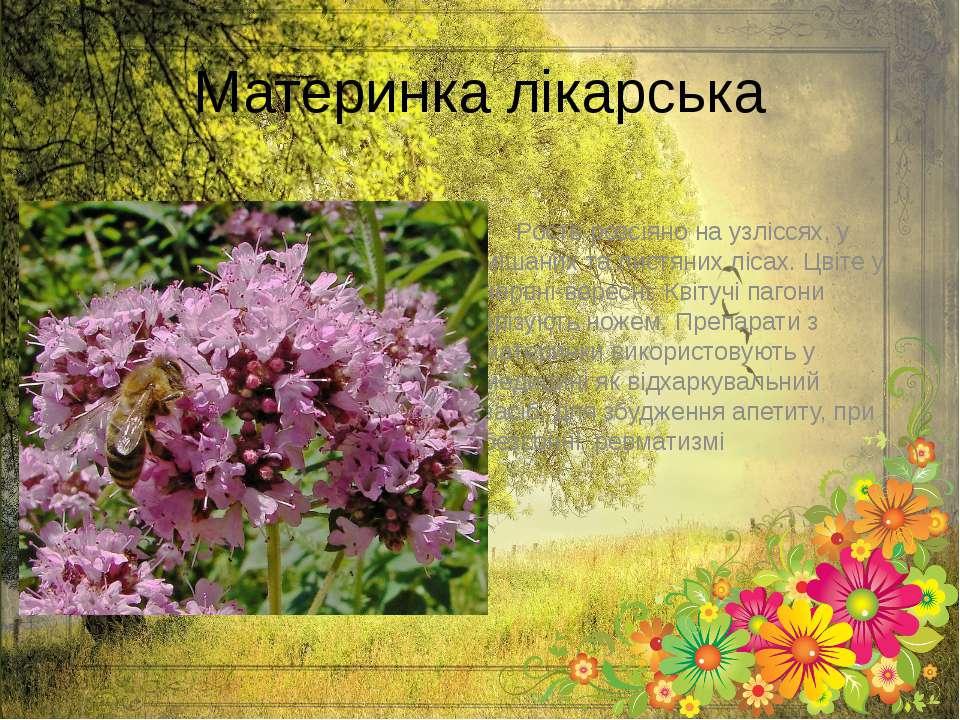 Материнка лікарська Росте розсіяно на узліссях, у мішаних та листяних лісах. ...