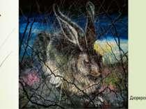 Дюреровский заяц.