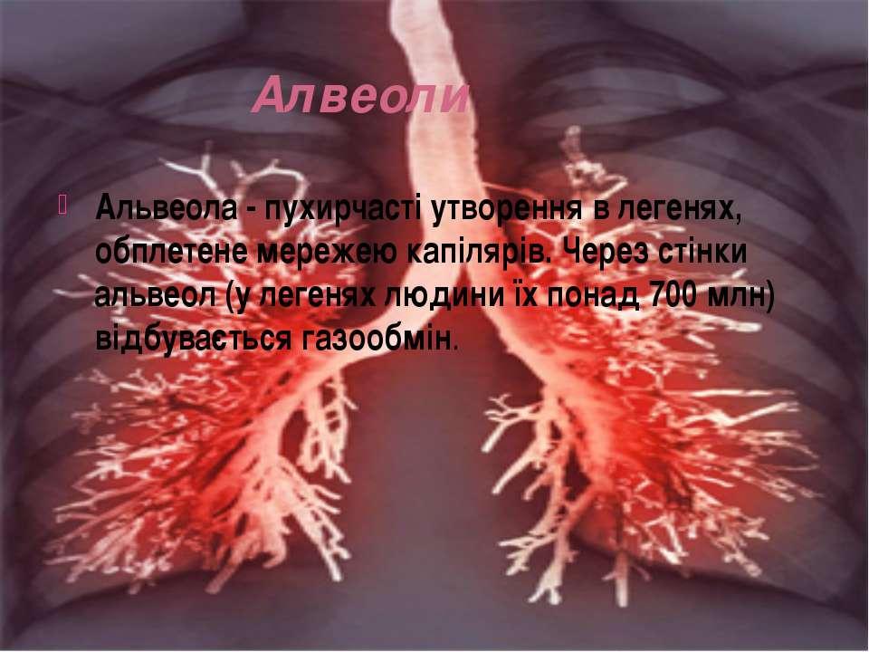Алвеоли Альвеола - пухирчасті утворення в легенях, обплетене мережею капілярі...