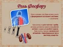 Одна з речовин, яка бере активну участь у формуванні кісткової системи, — ц...