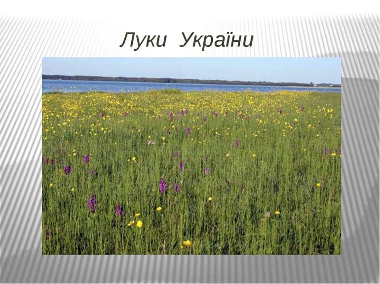 Луки України