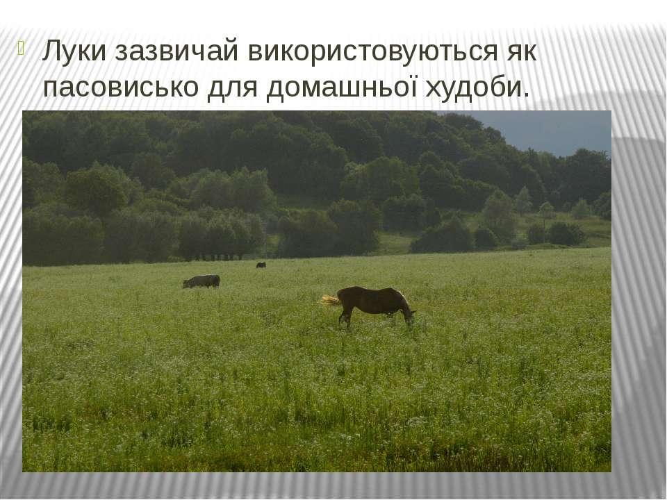 Луки зазвичай використовуються як пасовисько для домашньої худоби.
