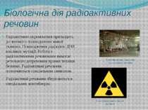 Біологічна дія радіоактивних речовин Радіоактивне опромінення призводить до з...