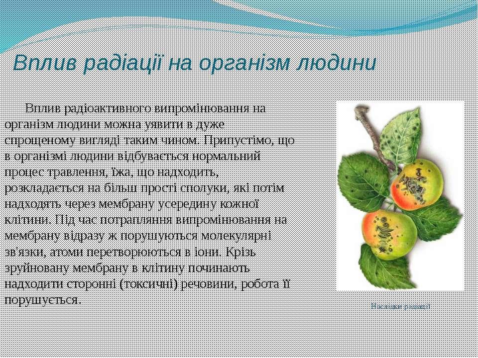 Вплив радіації на організм людини Вплив радіоактивного випромінювання на орга...