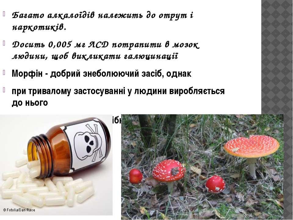 Багато алкалоїдів належить до отрут і наркотиків. Досить 0,005 мг ЛСД потрапи...