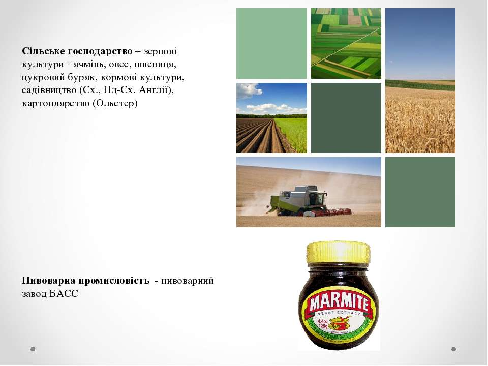 Сільське господарство – зернові культури - ячмінь, овес, пшениця, цукровий бу...