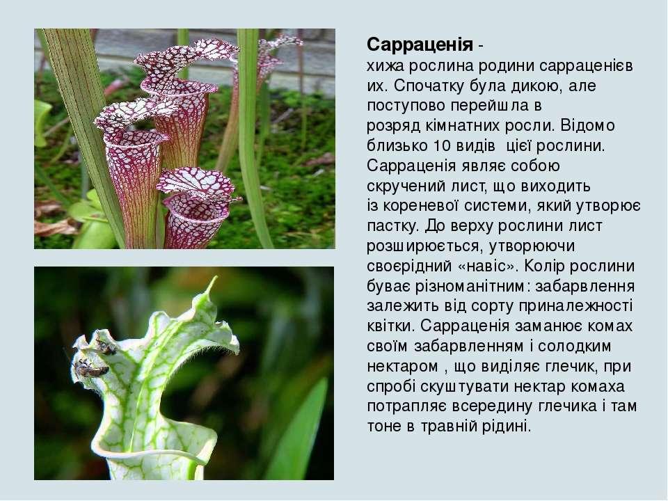 можно как реферат на тему рослини хижаки з картинками получению