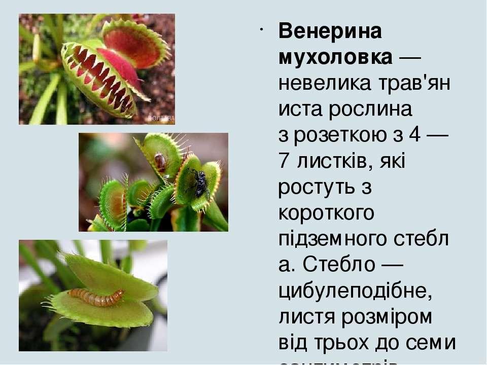 реферат на тему рослини хижаки з картинками менее