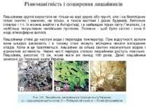 Різноманітність і поширення лишайників Лишайники здатні виростати не тільки н...