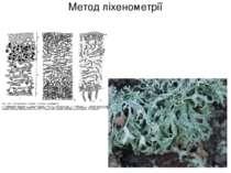 Метод ліхенометрії