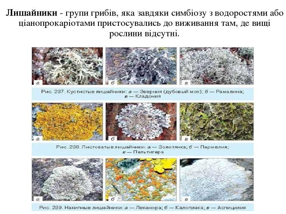 Лишайники - групи грибів, яка завдяки симбіозу з водоростями або ціанопрокарі...