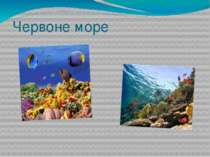 Червоне море