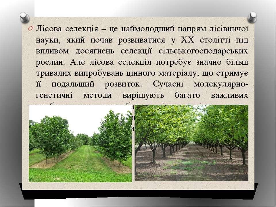 Лісова селекція – це наймолодший напрям лісівничої науки, який почав розвиват...