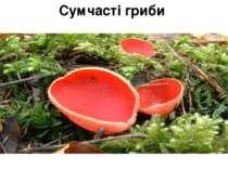 Сумчасті гриби