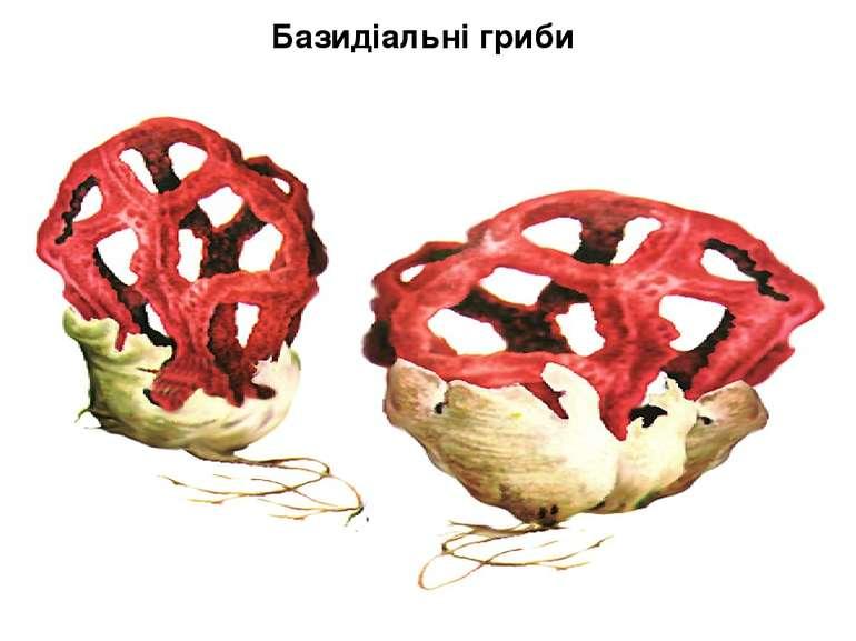 Базидіальні гриби