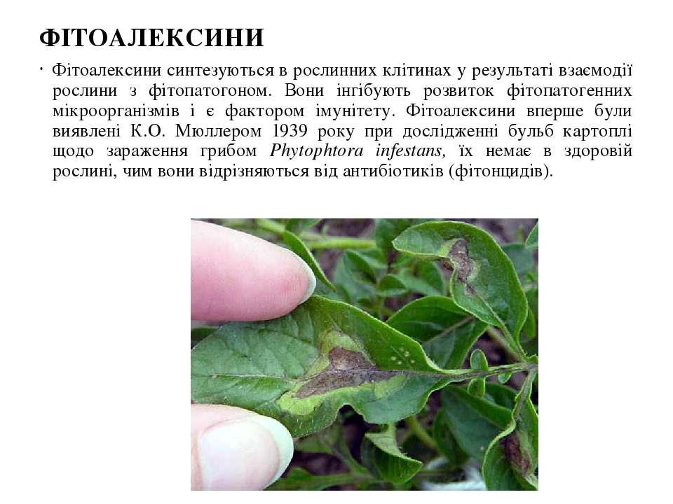 ФІТОАЛЕКСИНИ Фітоалексини синтезуються в рослинних клітинах у результаті взає...