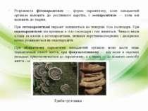Розрізняють фітопаразитизм — форма паразитизму, коли нападаючий організм нале...