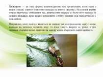 Хижацтво — це така форма взаємовідносин між організмами, коли один з видів (х...