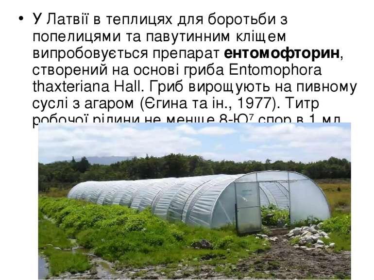 У Латвії в теплицях для боротьби з попелицями та павутинним кліщем випробовує...